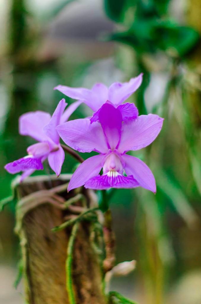 Orquídeas: O que são
