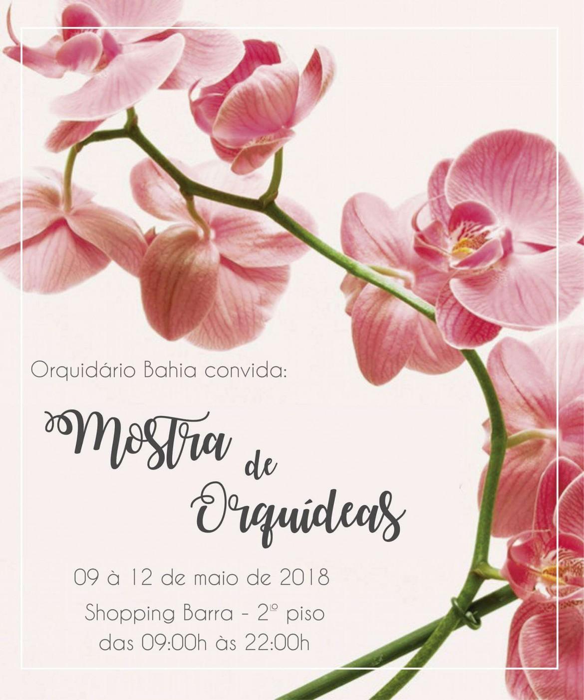 Festival de Orquídeas de Amargosa