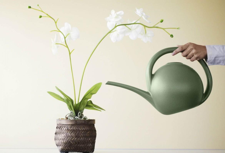 As principais dicas para quem não sabe cuidar de orquídeas