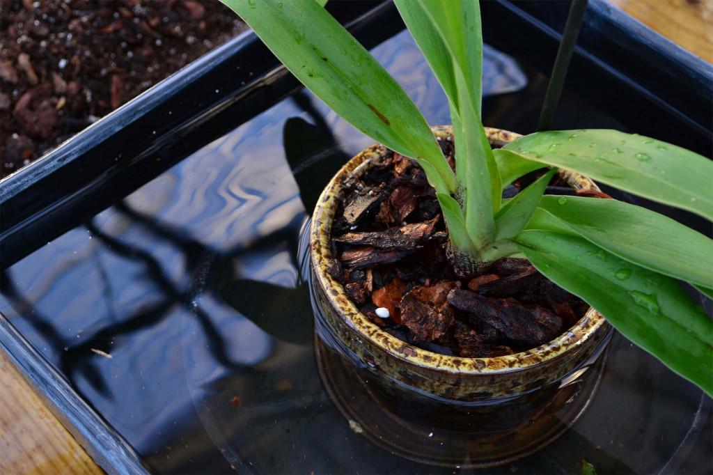 Onde devo colocar as orquídeas no meu apartamento?