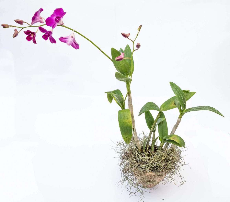 7 tipos de vaso para usar em orquídeas