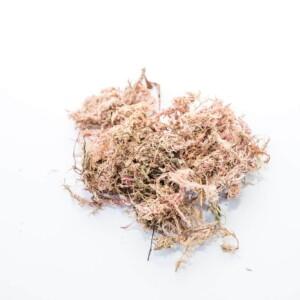 Substrato Chip de Coco